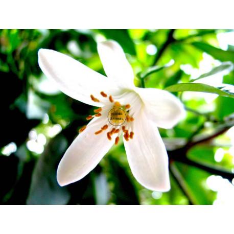 Aroma Ambiental Natural AZAHAR