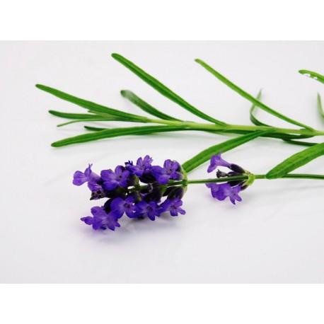 Aroma Ambiental Natural LAVANDA