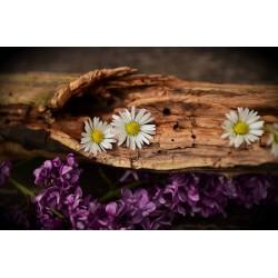Aroma Ambiental Natural MADERA